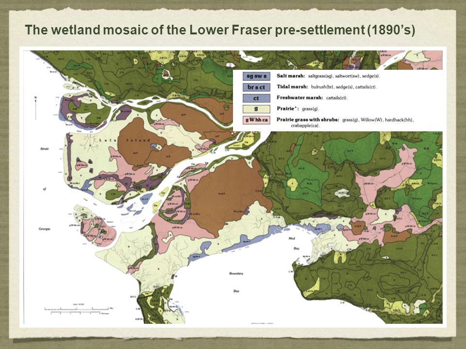 The wetland mosaic of the Lower Fraser pre-settlement (1890's)