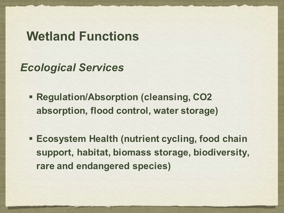 Wetland Functions Ecological Services