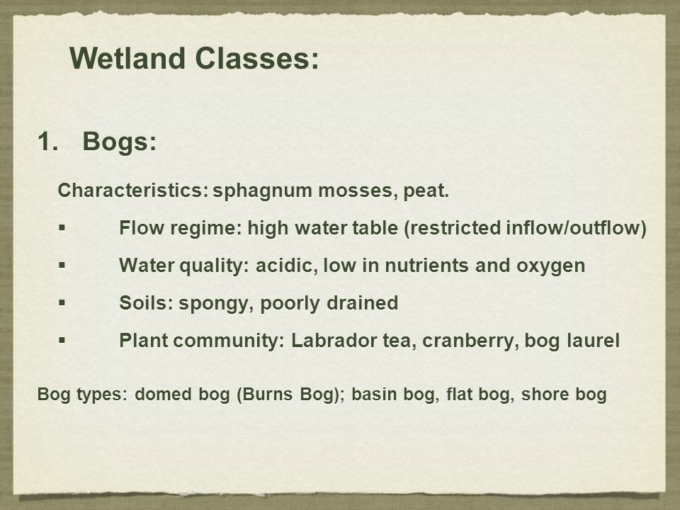 Wetland Classes: Bogs: Characteristics: sphagnum mosses, peat.