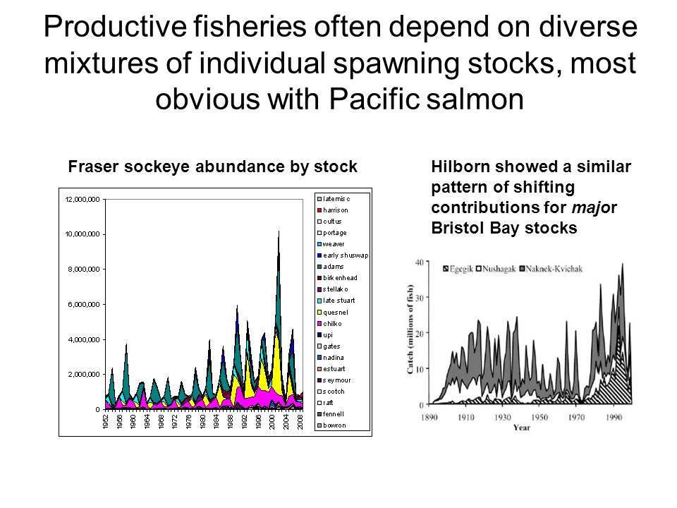 Productive fisheries often depend on diverse mixtures of individual spawning stocks, most obvious with Pacific salmon