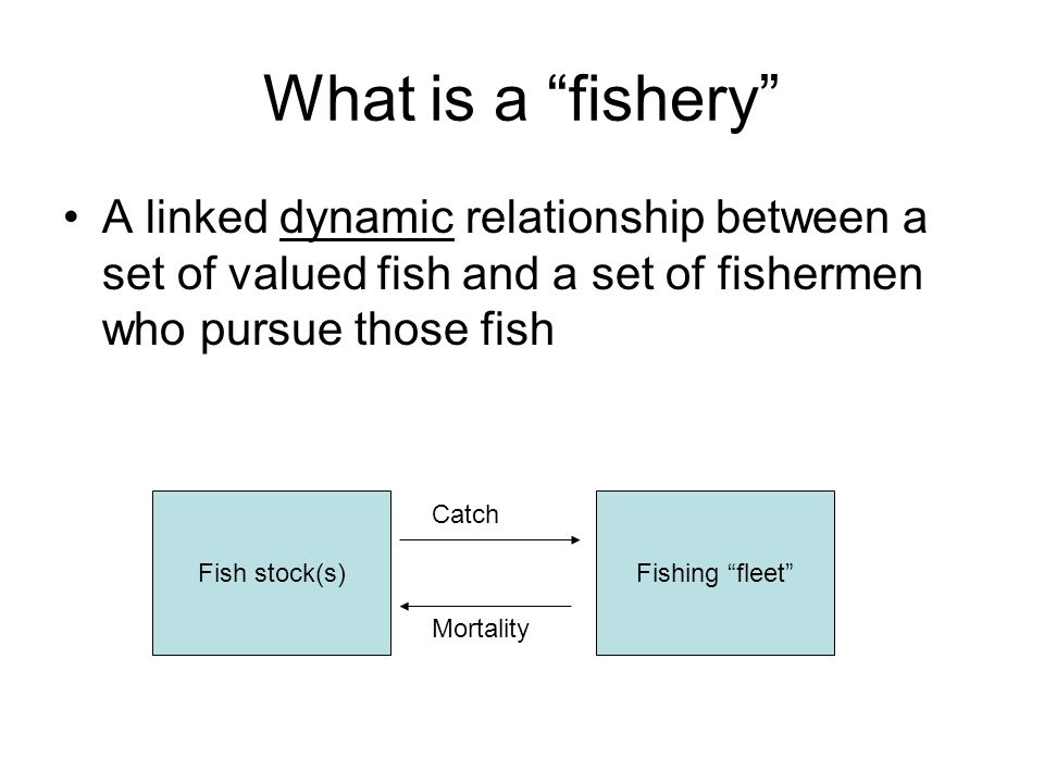 What is a fishery A linked dynamic relationship between a set of valued fish and a set of fishermen who pursue those fish.