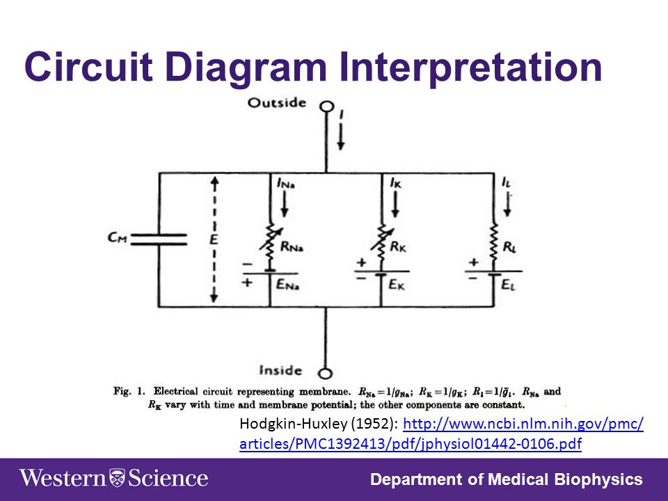 nathan law medical biophysics 3970 western university 03 ... circuit diagram of 8086 microprocessor