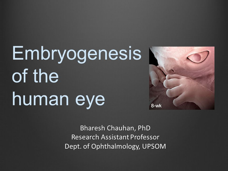 Embryogenesis of the human eye Bharesh Chauhan, PhD