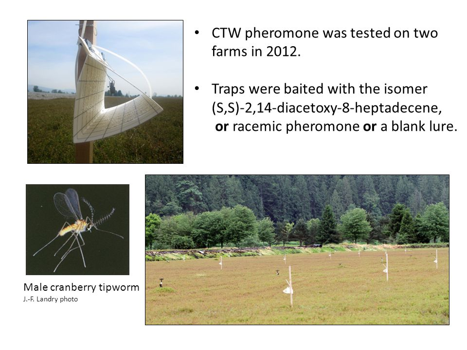 CTW pheromone was tested on two farms in 2012.