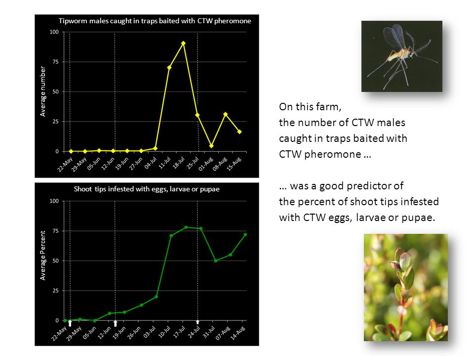 caught in traps baited with CTW pheromone … … was a good predictor of