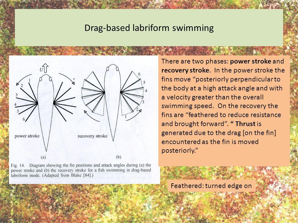 Drag-based labriform swimming