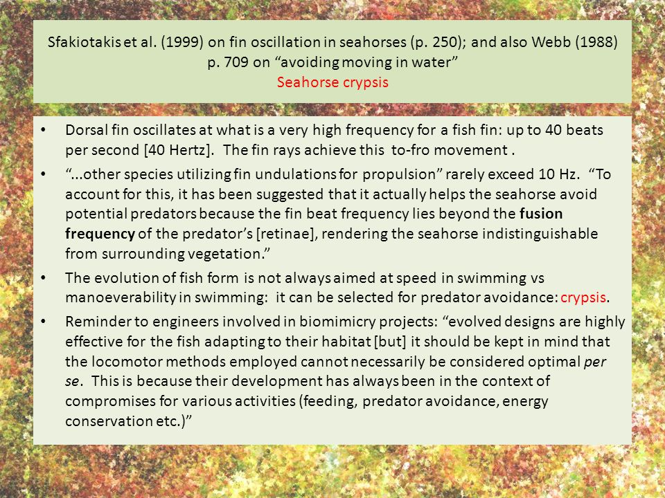Sfakiotakis et al. (1999) on fin oscillation in seahorses (p
