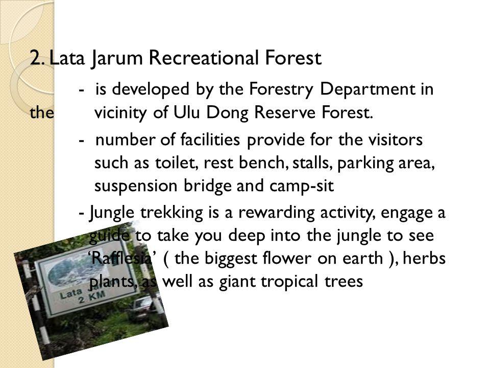 2. Lata Jarum Recreational Forest