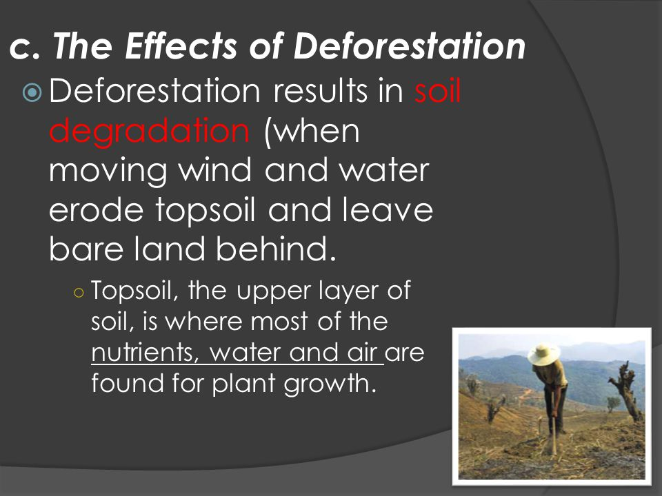 c. The Effects of Deforestation