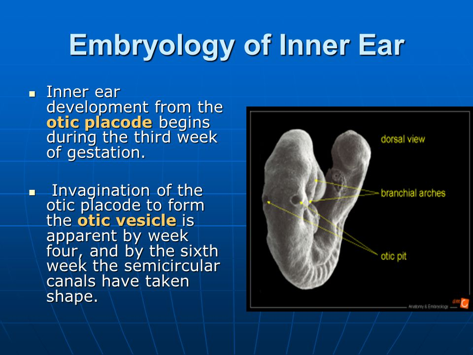 Embryology of Inner Ear