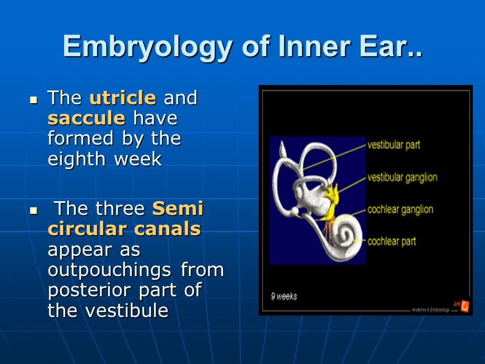 Embryology of Inner Ear..