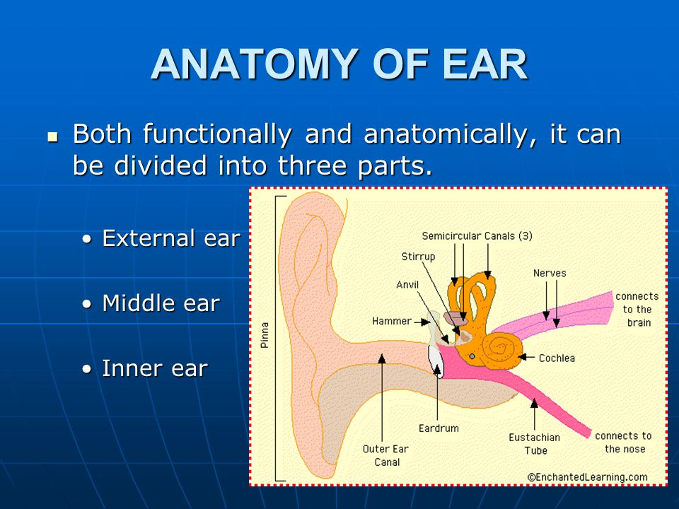 ANATOMY OF EAR Both functionally and anatomically, it can be divided into three parts. External ear.