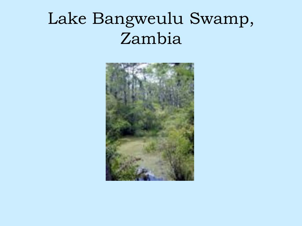 Lake Bangweulu Swamp, Zambia