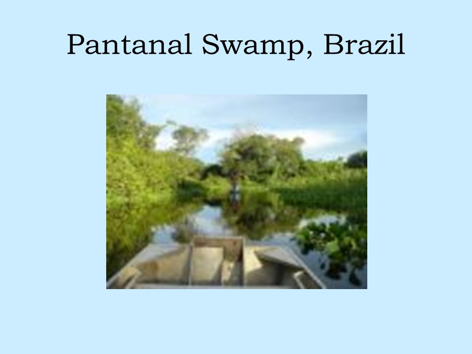 Pantanal Swamp, Brazil