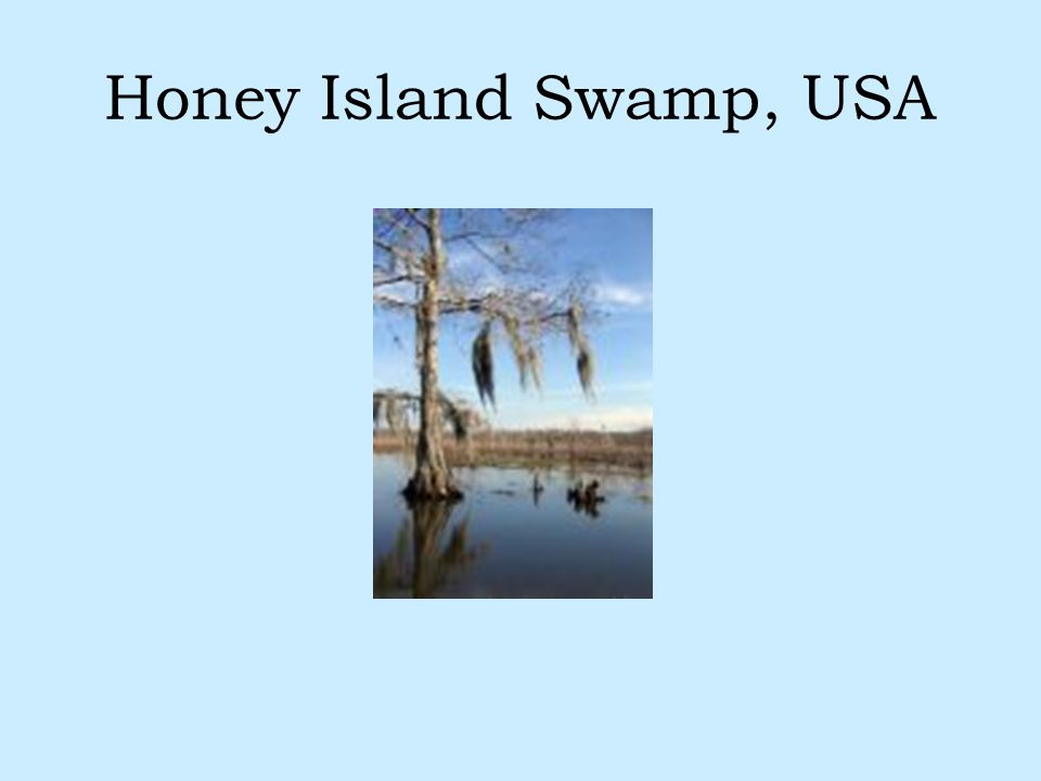 Honey Island Swamp, USA