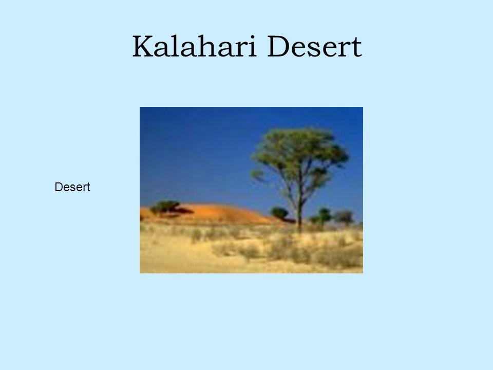 Kalahari Desert Desert