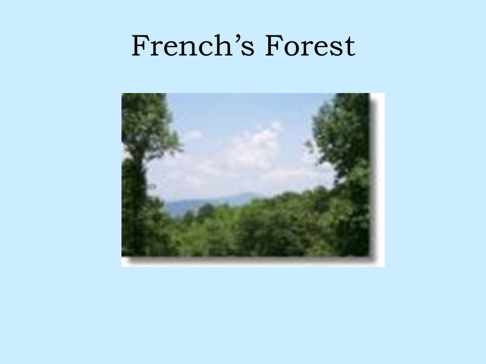 French's Forest