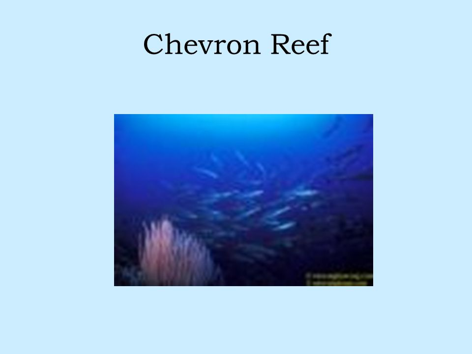 Chevron Reef