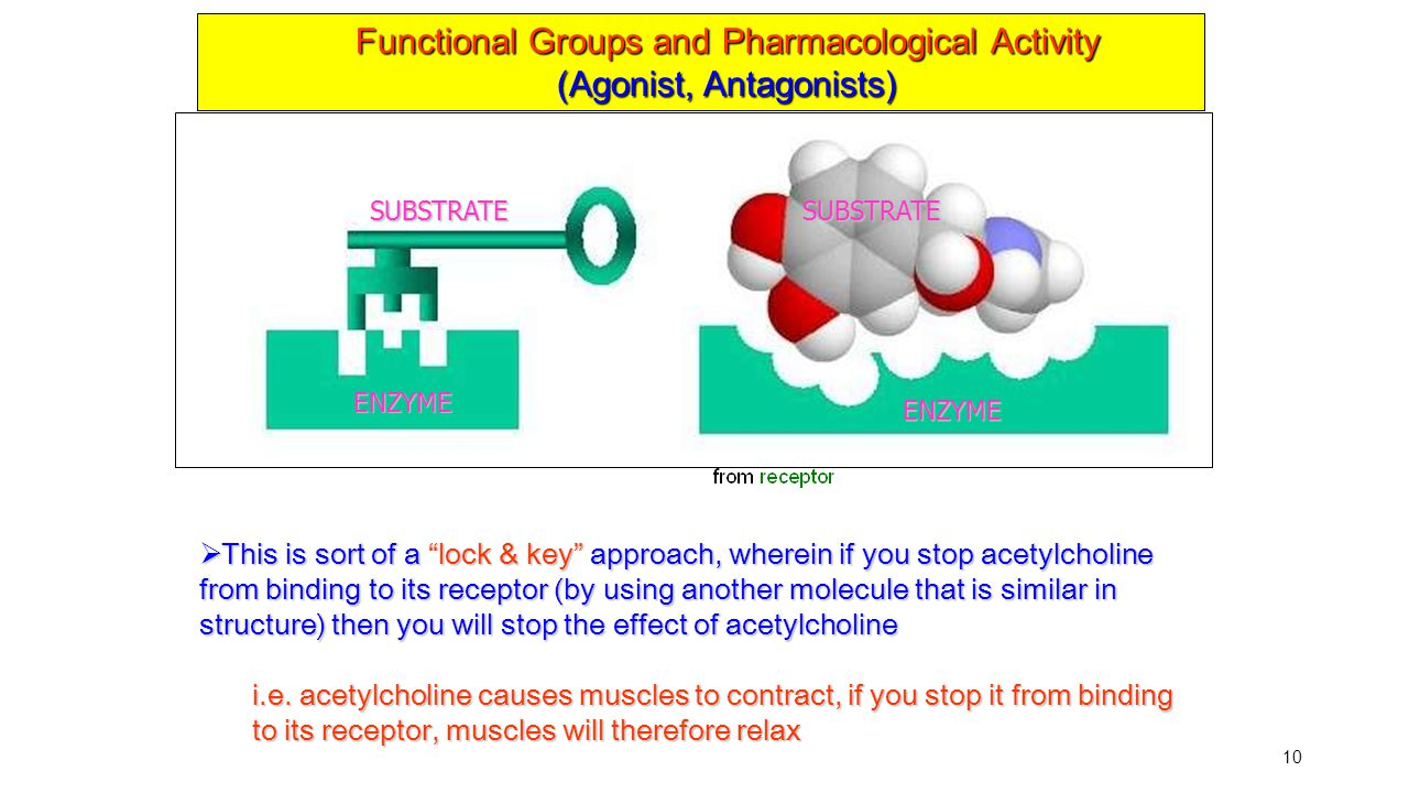 Functional Groups and Pharmacological Activity (Agonist, Antagonists)