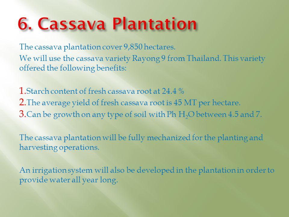6. Cassava Plantation The cassava plantation cover 9,850 hectares.