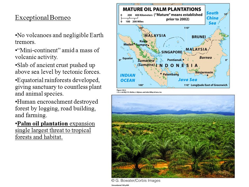 Exceptional Borneo No volcanoes and negligible Earth tremors.