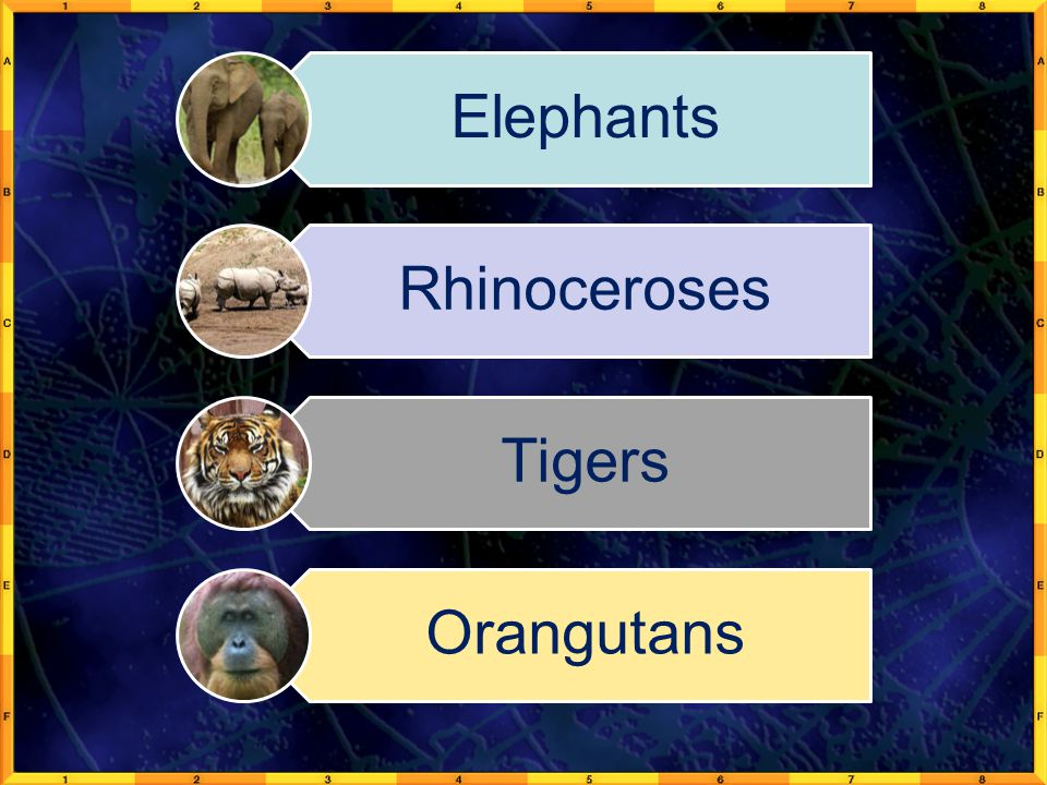 Elephants Rhinoceroses Tigers Orangutans