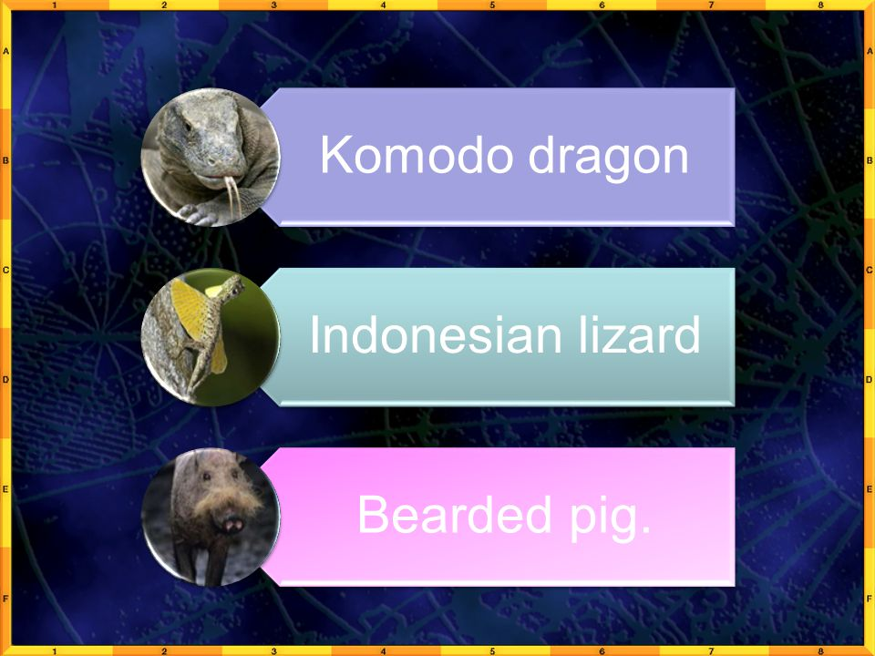 Komodo dragon Indonesian lizard Bearded pig.