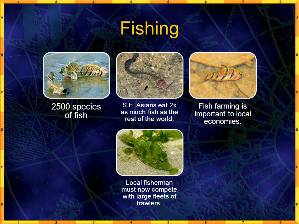 Fishing 2500 species of fish
