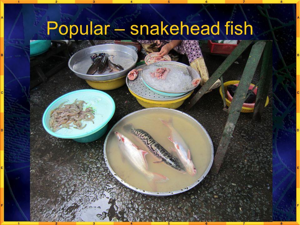 Popular – snakehead fish