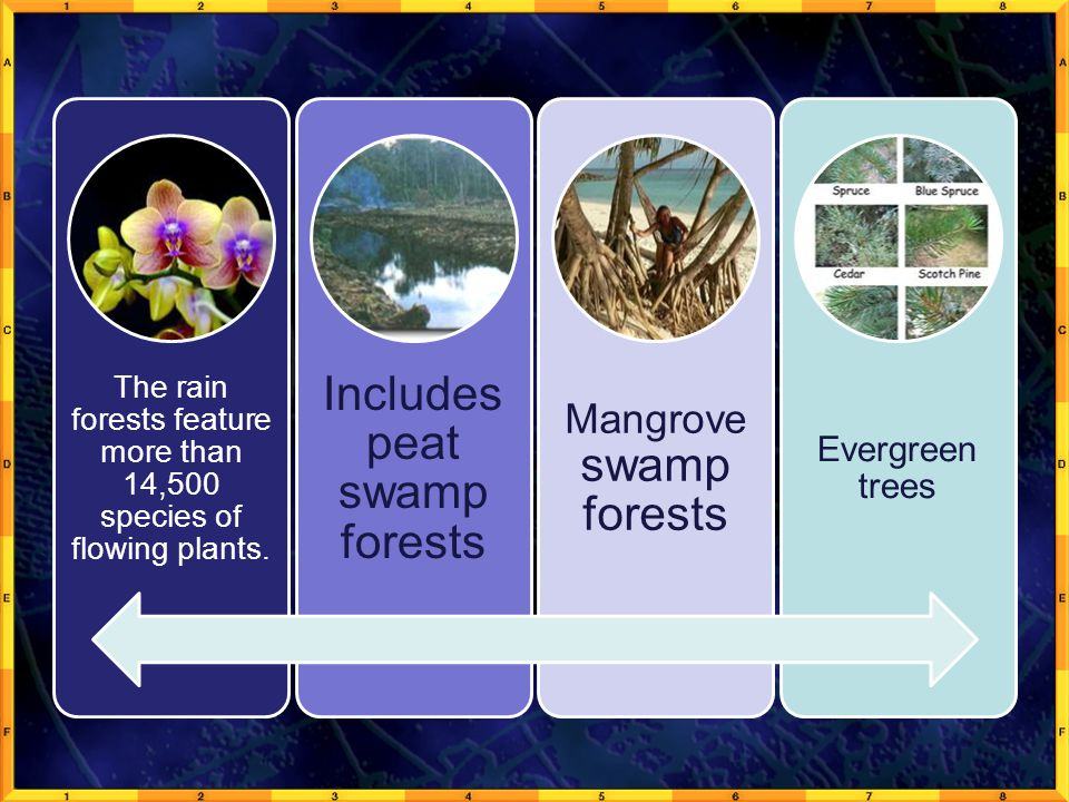 Includes peat swamp forests