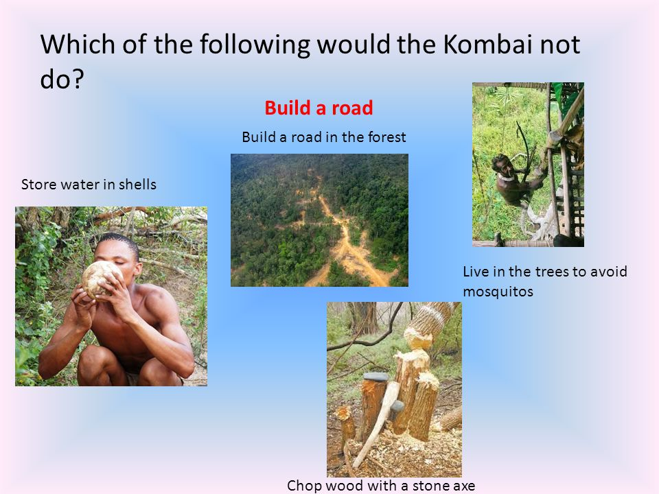 Which of the following would the Kombai not do