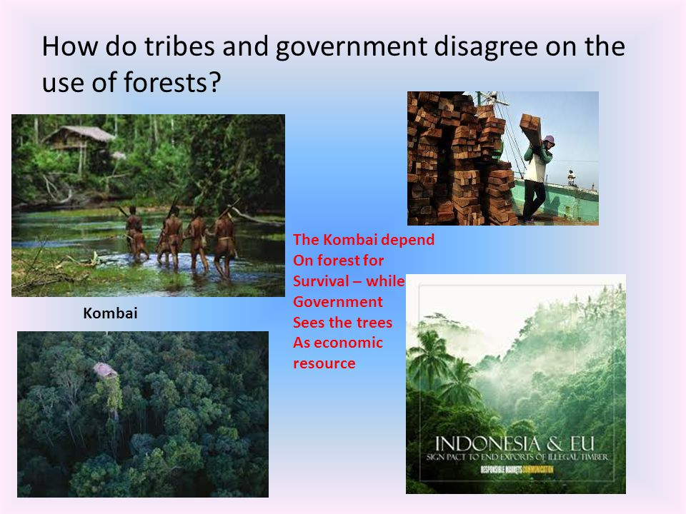 How do tribes and government disagree on the use of forests