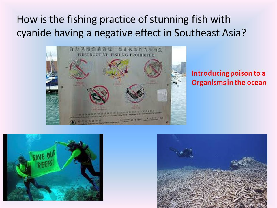 How is the fishing practice of stunning fish with cyanide having a negative effect in Southeast Asia