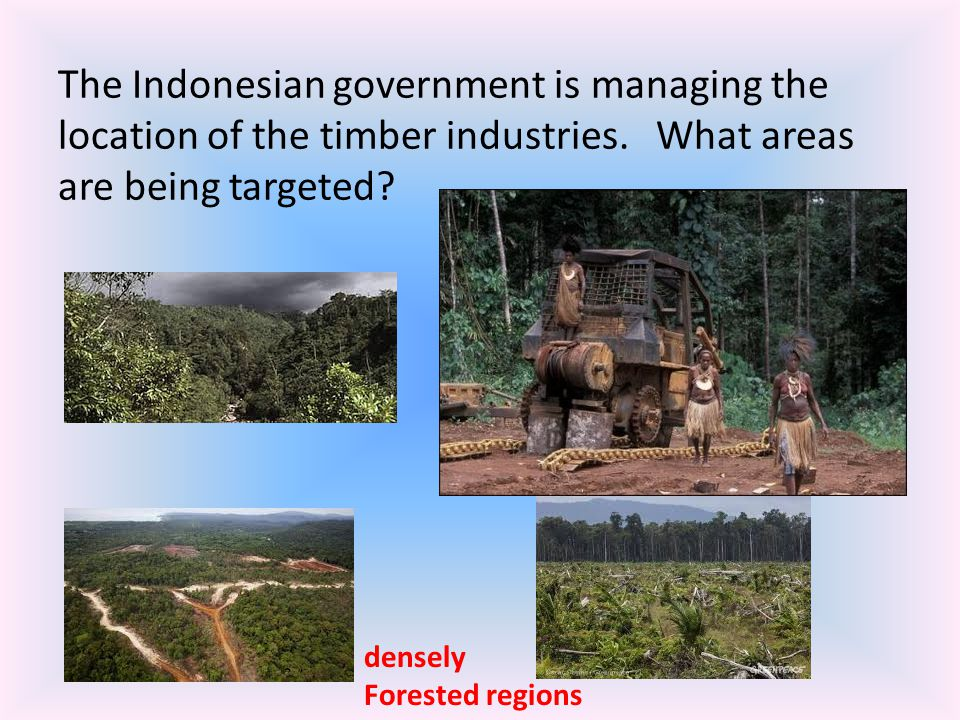 The Indonesian government is managing the location of the timber industries. What areas are being targeted