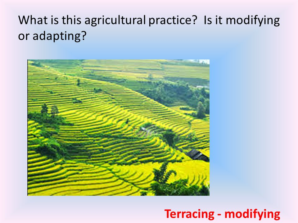 What is this agricultural practice Is it modifying or adapting
