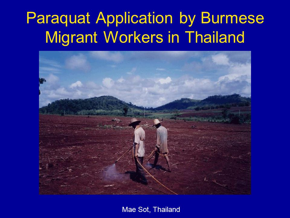Paraquat Application by Burmese Migrant Workers in Thailand