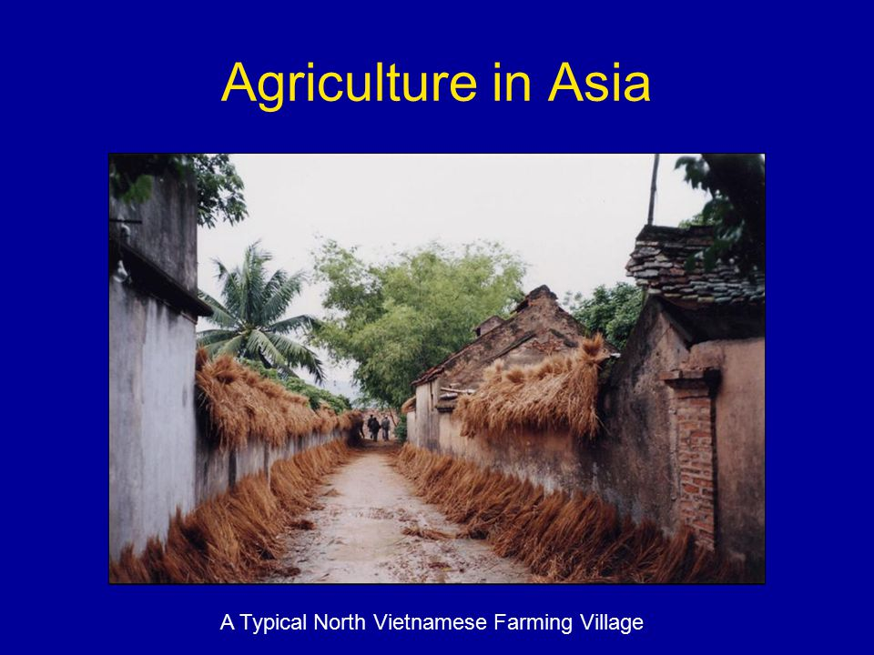 Agriculture in Asia A Typical North Vietnamese Farming Village