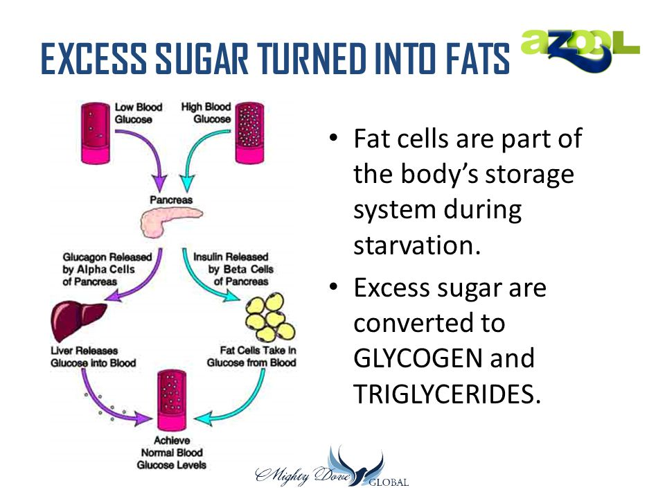 EXCESS SUGAR TURNED INTO FATS