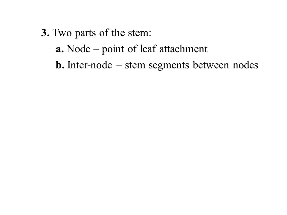 3. Two parts of the stem: a. Node – point of leaf attachment.