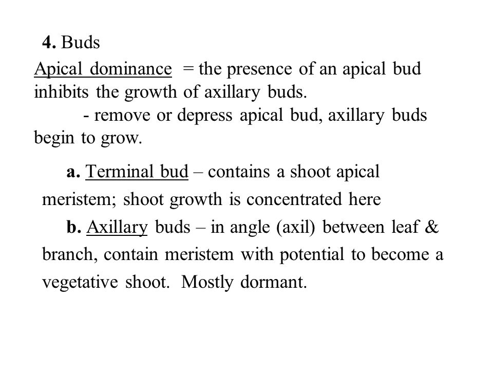 4. Buds Apical dominance = the presence of an apical bud inhibits the growth of axillary buds.