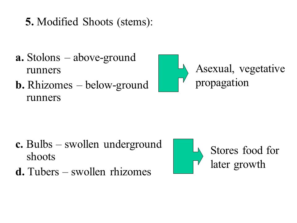 5. Modified Shoots (stems):