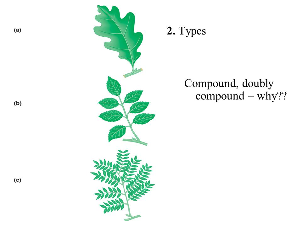 2. Types Compound, doubly compound – why