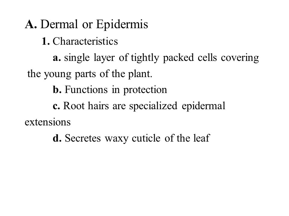 A. Dermal or Epidermis 1. Characteristics
