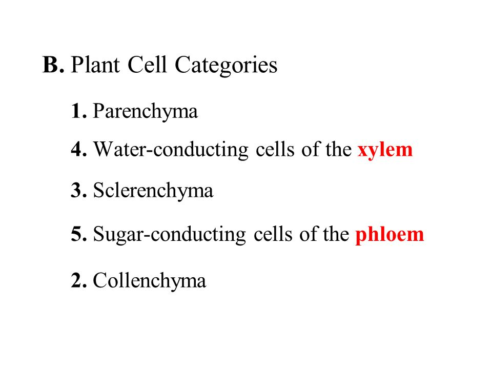 B. Plant Cell Categories