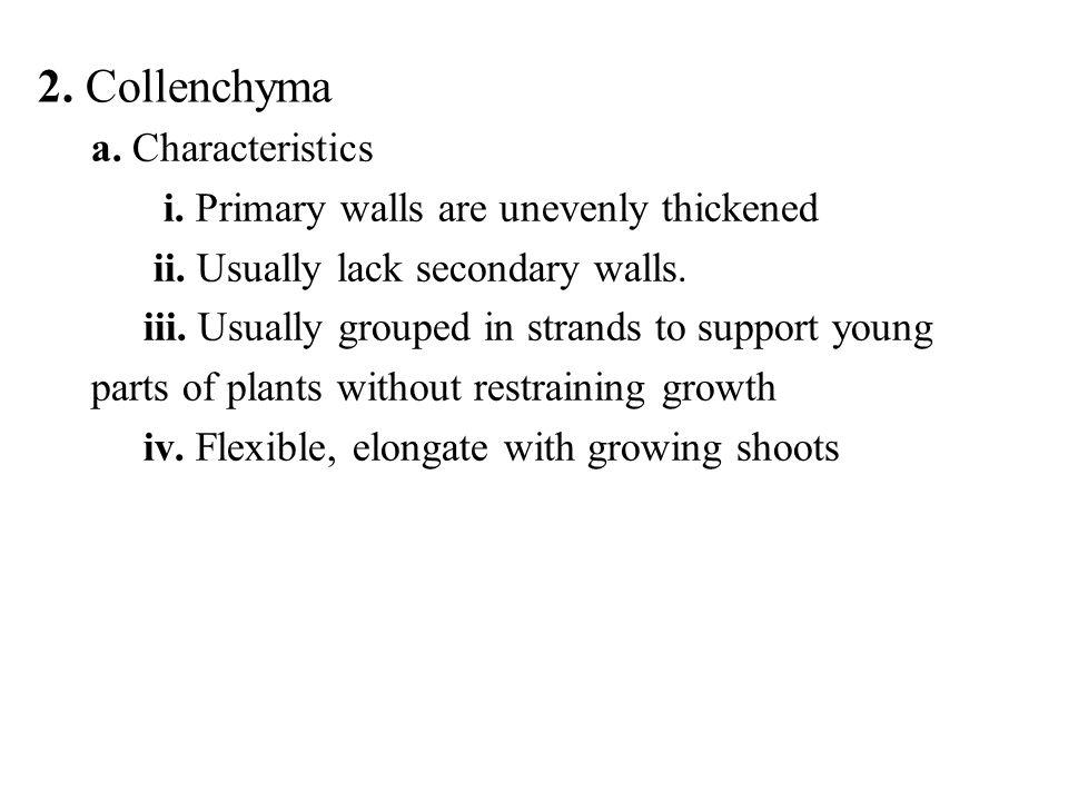 2. Collenchyma a. Characteristics