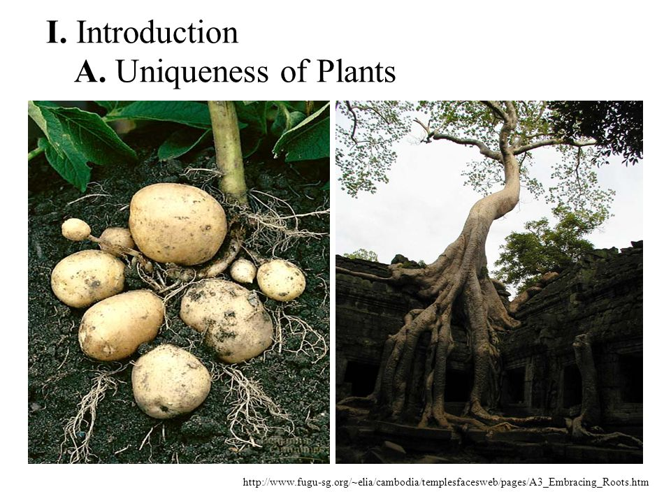 I. Introduction A. Uniqueness of Plants