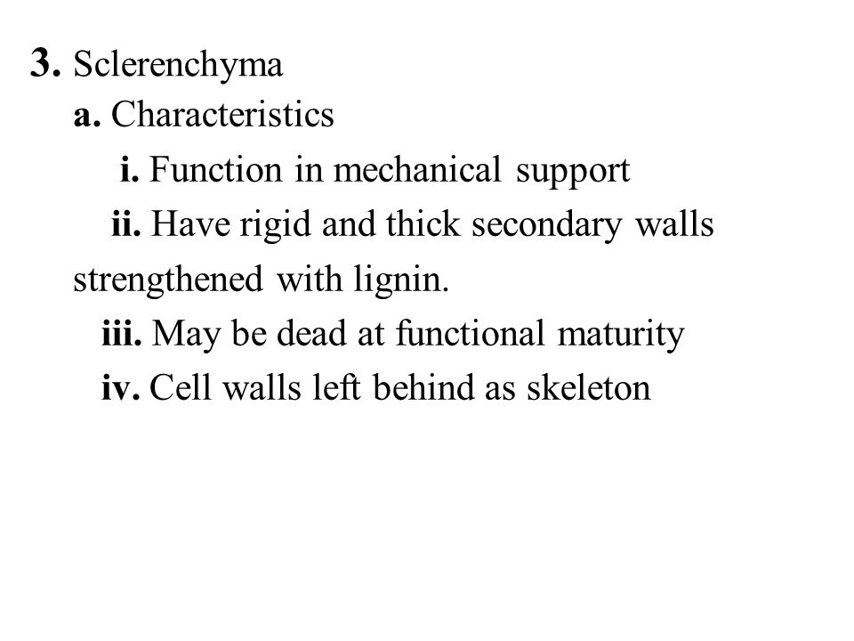 3. Sclerenchyma a. Characteristics i. Function in mechanical support