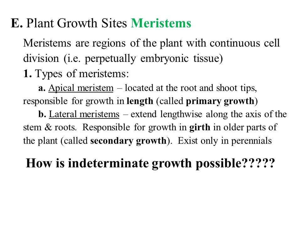 E. Plant Growth Sites Meristems