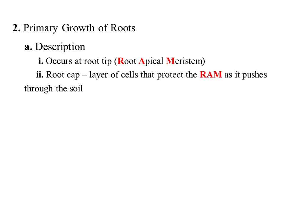 2. Primary Growth of Roots