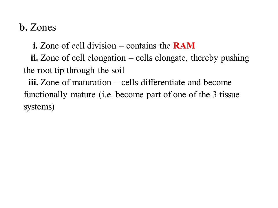 b. Zones i. Zone of cell division – contains the RAM